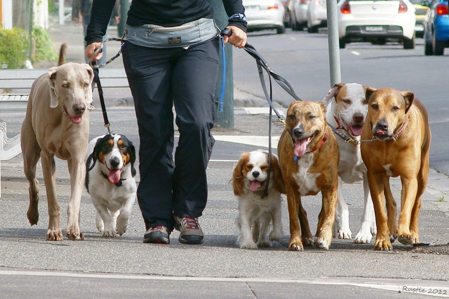مجموعة كلاب مع مربيهم